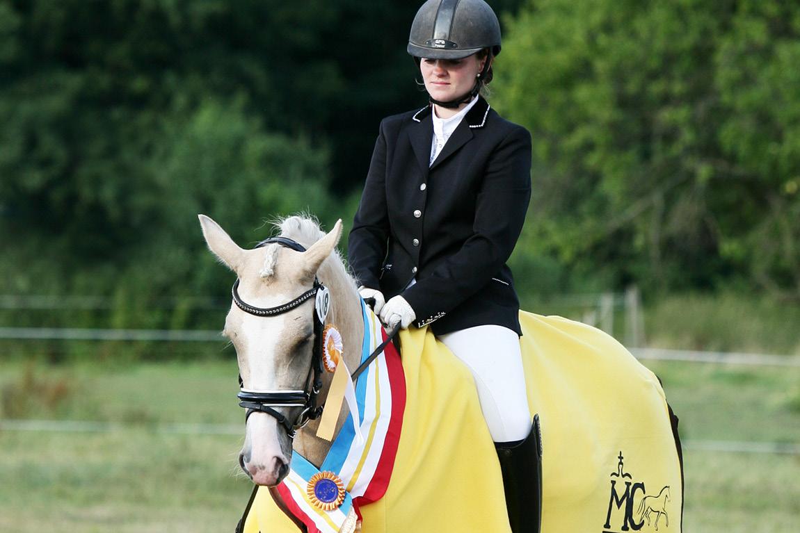 Ausbildung von Ponys und Pferden in Schleswig-Holstein