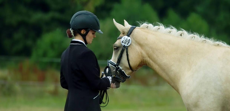 Ausbildung-Beritt-Pony-Pferd-Schleswig-Holstein-Sarah-Thiel-THI-Reitponys