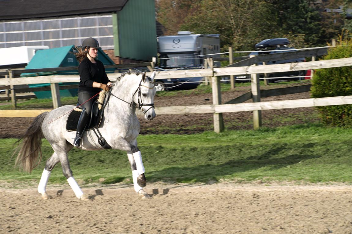 Berittstall für Ponys und Pferde in Schleswig-Holstein