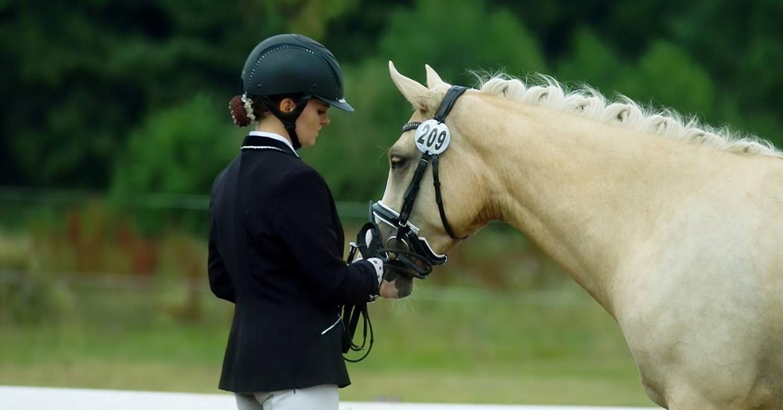 Junges Pony ausbilden lassen in Schleswig-Holstein