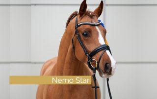Der Reitponyhengst und Sohn des FS Numero Uno - Oakland's Nemo Star, wurde gekört