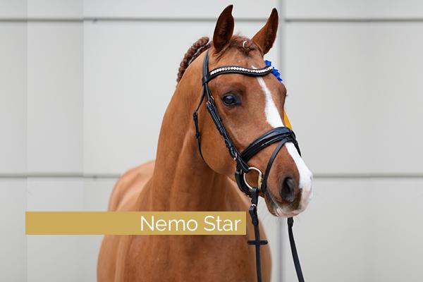 Oakland's Nemo Star – in Neumünster gekört