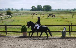 First Pleasure und Sarah Thiel ( Dressurausbildung und Ponyausbildung in Schleswig-Holstein)
