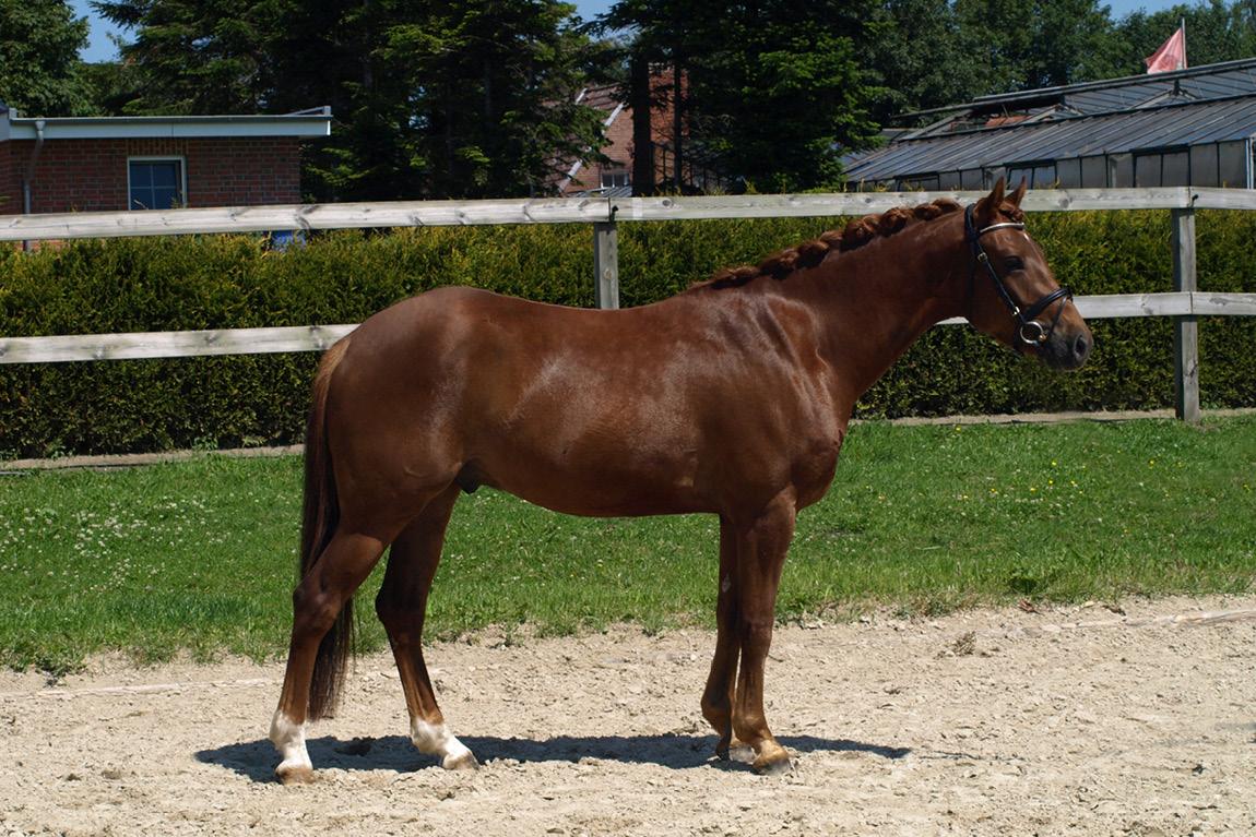 pony kaufen und verkaufen sale i thi reitponys sarah thiel