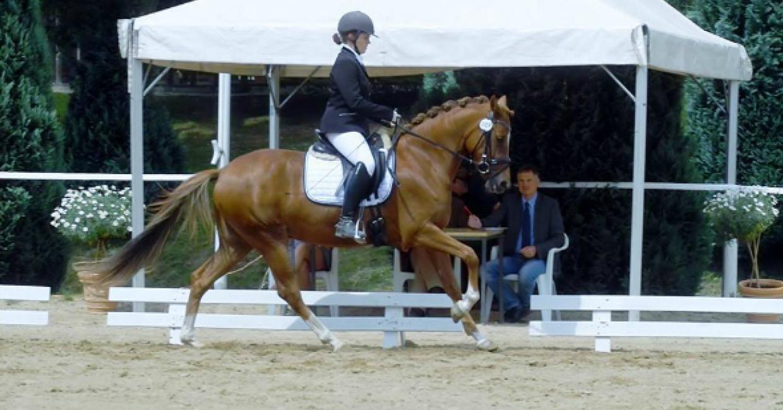 Turniervorstellung von Ponys in Schleswig-Holstein