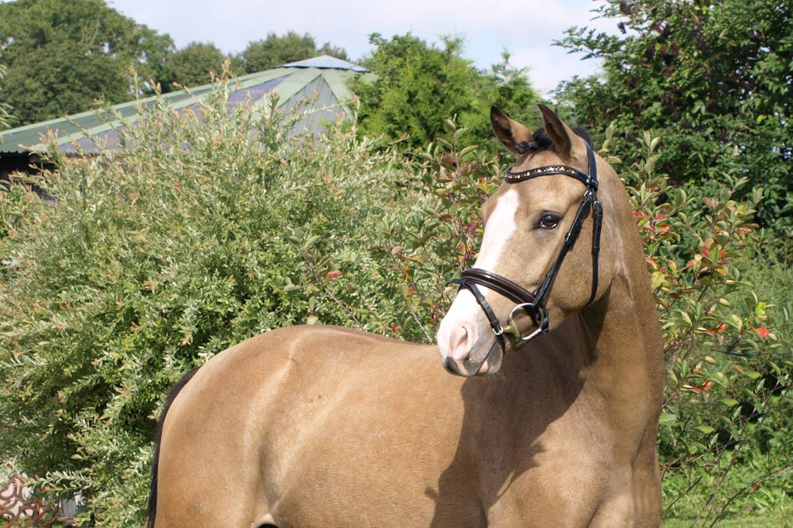 Kauf, Verkauf & Vermittlung von Ponys
