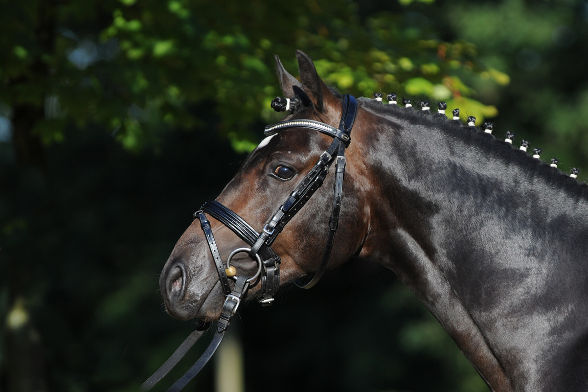 Verkaufsberitt für Ponys mit Sonderkonditionen für Züchter