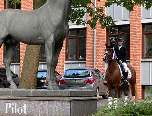 Das Westfälische Pferdestammbuch nominiert Valerio für das Bundeschampionat